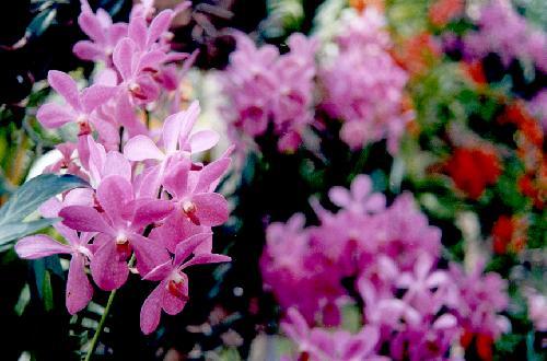 Orchids Farm Davao City
